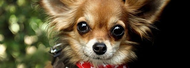 Q I am worried about who will look after my dogs when I die. Is there anything I can do to ensure they will be cared for?