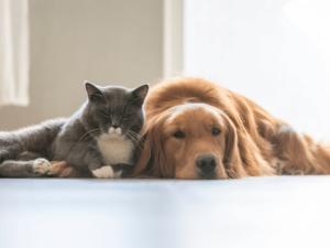reform on animal abuse